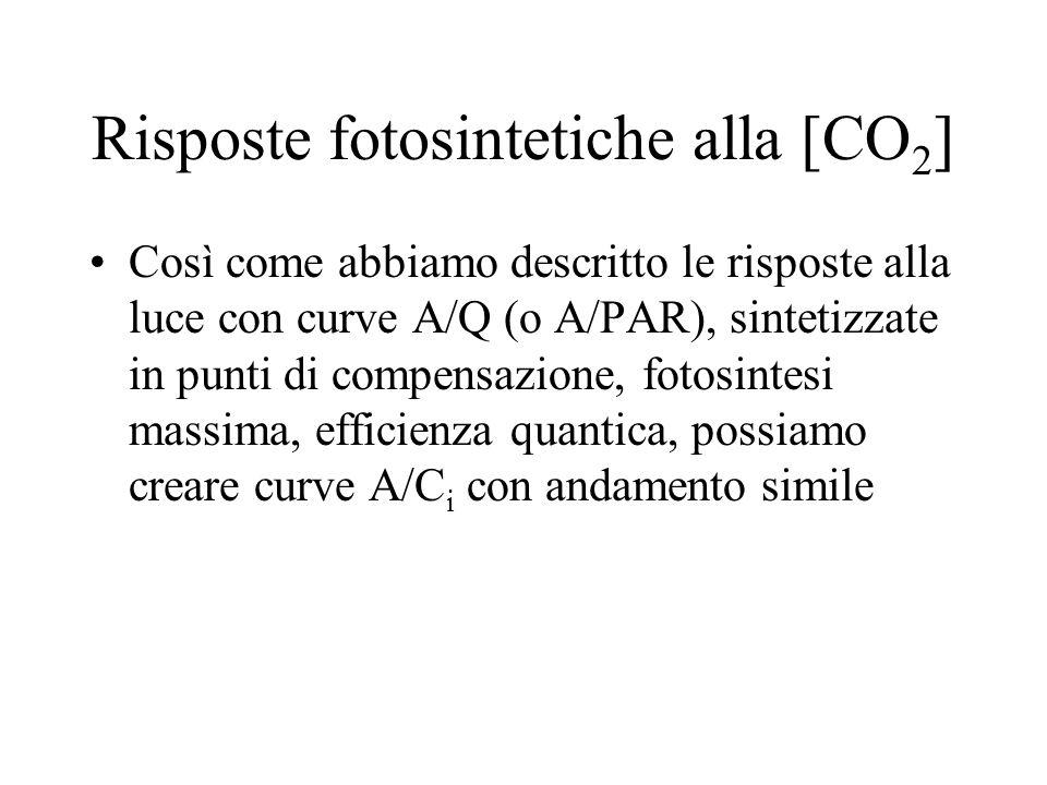 Risposte fotosintetiche alla [CO2]